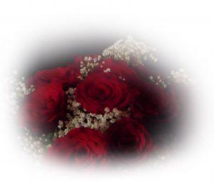 Bild på rosor